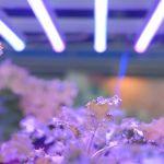 Led светильники для растений: критерии выбора